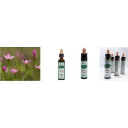 Kukkaterapia